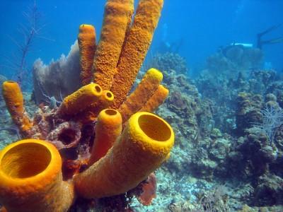 seasponge