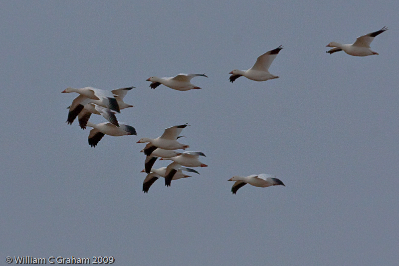 birds in sync